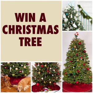 here is an offer where you can enter to win 1 of 3 green valley christmas trees this one will end on november 5 2017 at 1159pm pacific time