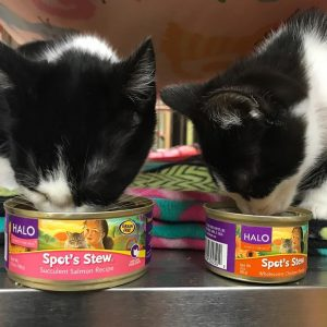 free can of halo cat food julie s freebies