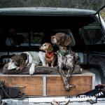 Orvis Dog Bundle Sweepstakes