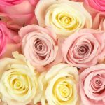 Extra's Passion Roses Giveaway