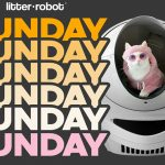 November Litter Robot Giveaway