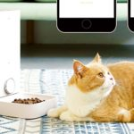 Automatic Pet Feeder Giveaway