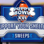 Support Your Shelter Sweepstakes