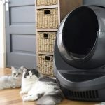 January Litter Robot Giveaway