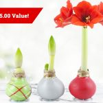 Tulip World Giveaway