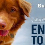 BarkSpot Treat Giveaway