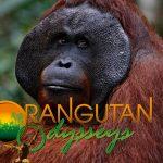 Orangutan Care Pack Giveaway