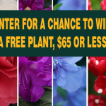 Lots of Plants Giveaway