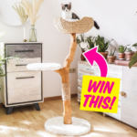 Wooden Cat Tree Condo Giveaway