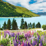 Win a Trip to New Zealand with Babich Wines Sweepstakes