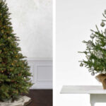Treetime 2021 Pick Your Preferences Sweepstakes